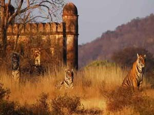 Golden Triangle Tour Package with Ranthambore golden tour package jalmahal amber fort car tempo traveller bus hire rental paras